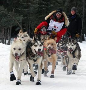 Iditarod_Ceremonial_start,_Mitch_Seaveys_team