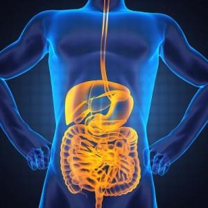 Gut health 2