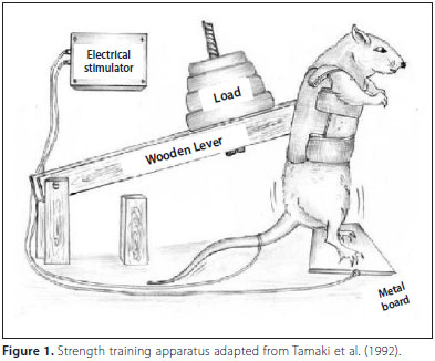 rat lifting weights