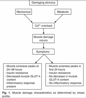 Muscle damage and insulin resistance
