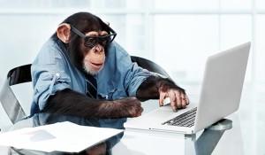 wso_monkey_team_